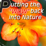 #32 Understanding Nature � Putting the �WOW�  back into Nature